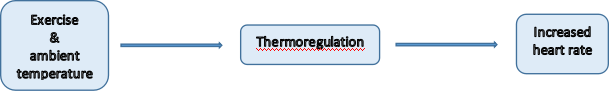 Relationship between exercise, air temperature, thermoregulation and heart rate