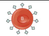 B blood group