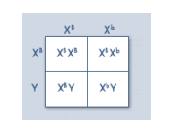 Punnett square for gene type